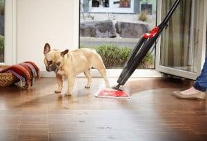 Dampfreiniger und Heißwasser-Reinigungsgeräte sorgen für hygienische Sauberkeit in Haushalten mit Haustieren. Foto: djd/vileda