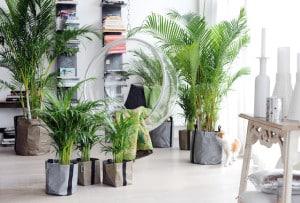 Bild: Gärtnerglück im Wohnzimmer: Der Zimmergarten fördert die eigene Gesundheit spürbar und messbar. Foto: pflanzenfreude.de.