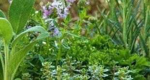 Kräuter und Pflanzen für ein gutes Immunsystem.
